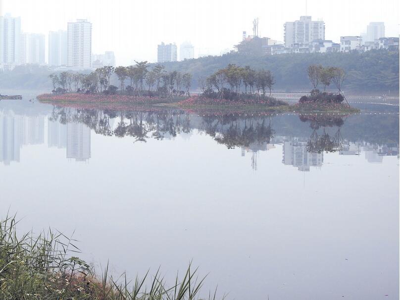 南宁南湖公园水质改善项目完工 水清岸绿好生态