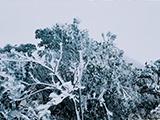 大明山银装素裹迎新年 雾凇景观美若童话(高清)