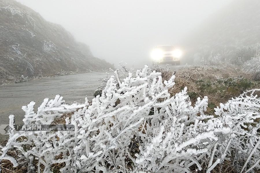 高清:乐业高山地带现冰霜雾凇景观 冰雪美景爆表