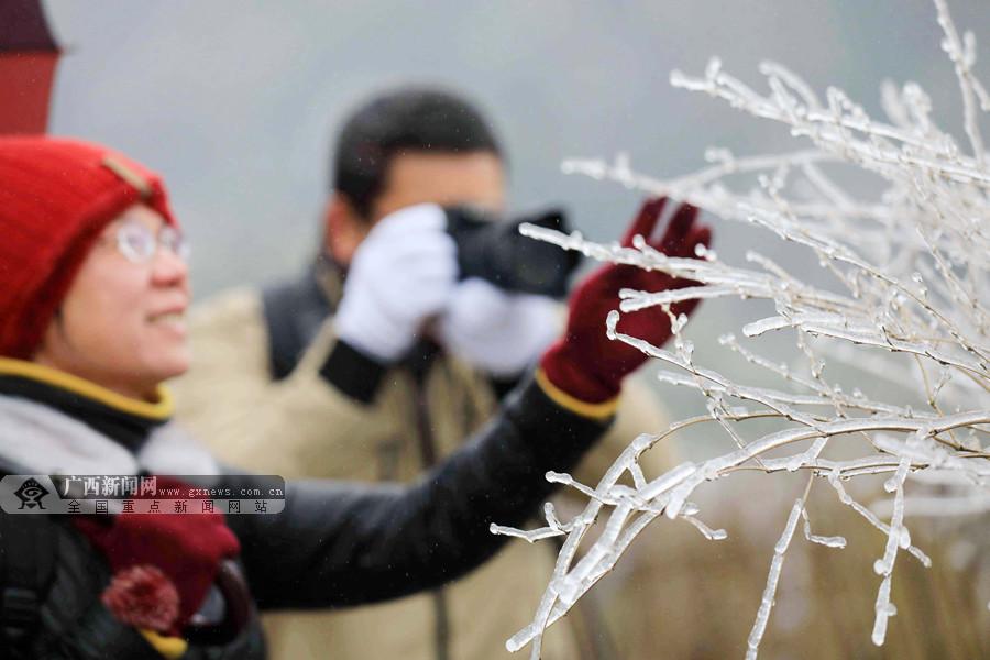 高清:融安高寒山区迎来降雪 银装素裹雪景如画