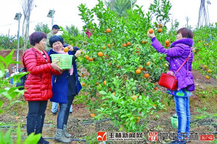 """博白县举办首届""""中国农民丰收节"""""""