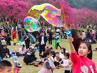 2月6日焦点图:南宁市石门森林公园樱花竞相开放