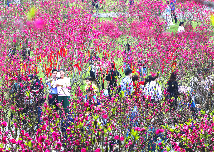 2月9日焦点图:南宁青秀山上12万多株桃花竞相绽放