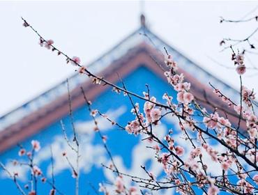 福州:古寺梅香