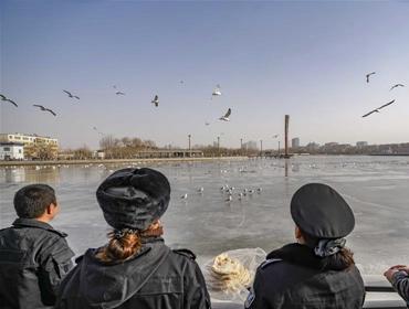 """新疆库尔勒:越冬天鹅""""闹""""新春"""