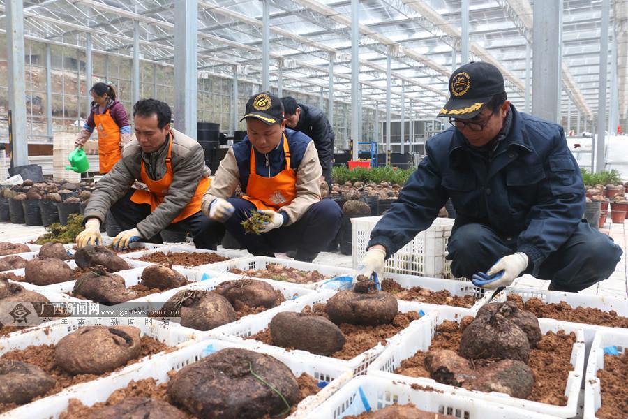 钟山县:发展科技型有机农业带农脱贫