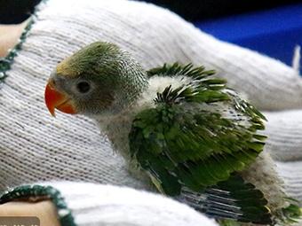 崇左查获200多只野生活体雏鸟 均为重点保护动物