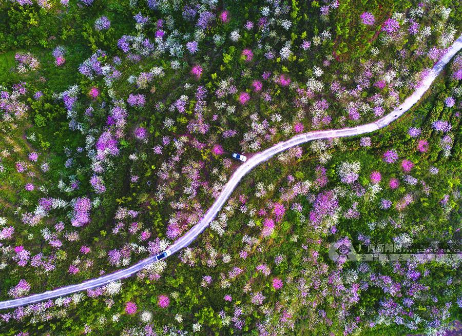 2月25日焦点图:南国春早入画来 八桂大地春光旖旎