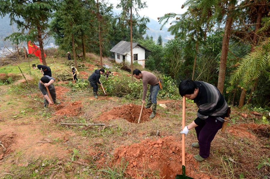 三江基层党员村干种植高效油茶为脱贫