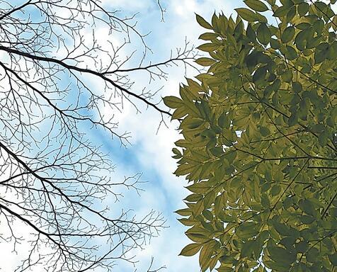 广西印发污染天气应急预案 科学应对轻度污染天气