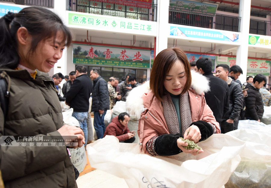 三江春茶产销两旺 飘香春茶助群众脱贫致富(图)
