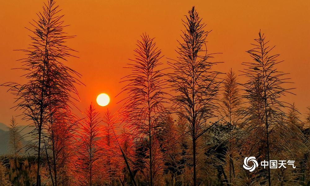 高清组图:久雨转晴夕阳西下 龙州甘蔗开花美如画