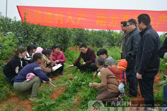 西乡塘区:专家下乡助农民抢春耕