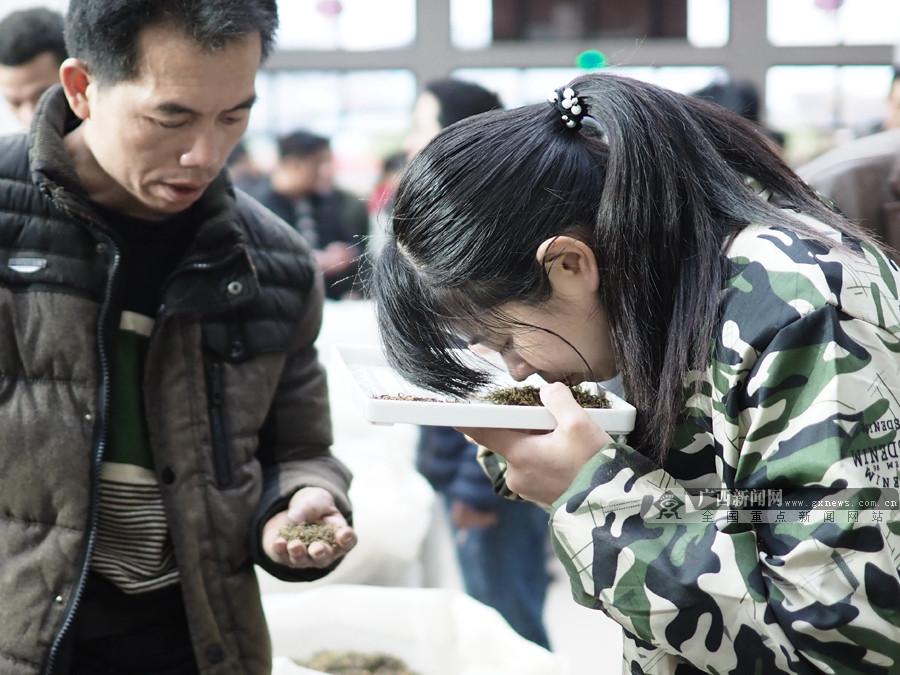 高清:三江春茶产销两旺