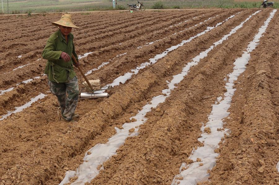 高清:耕地、播种、施肥……好一派春耕农忙景象