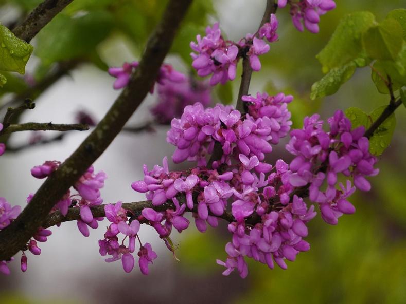 高清:花卉苗木值盛花期 带你看镜头下的奇花异草