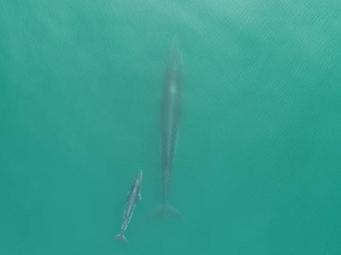 暖哭!北海涠洲岛鲸鱼首见母子同框