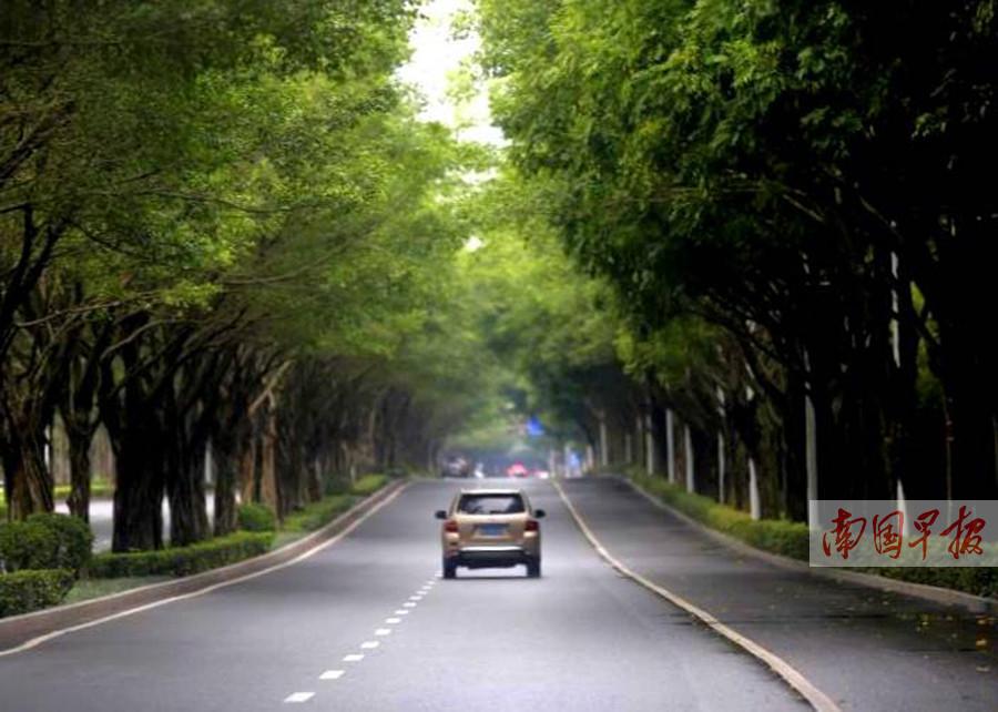 高清:绿城南宁处处见绿意 满城皆飞花