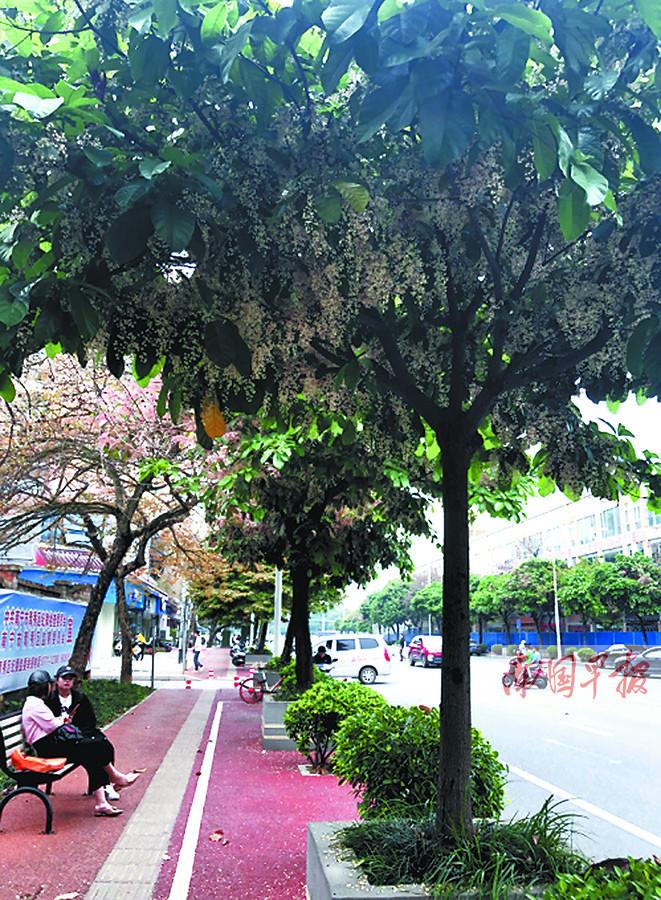 4月12日焦点图:生态岛上花争艳 南宁南湖公园美景再升级