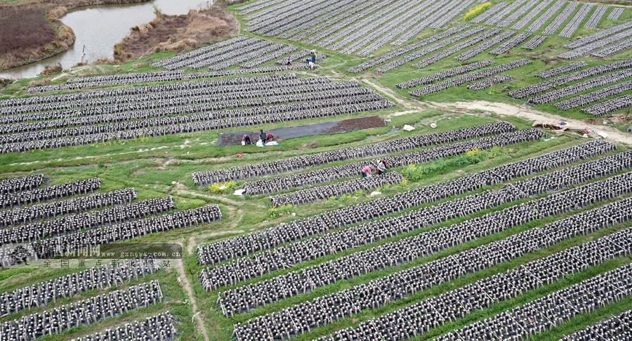 贺州:食用菌产业扶贫让更多群众有活干有钱赚