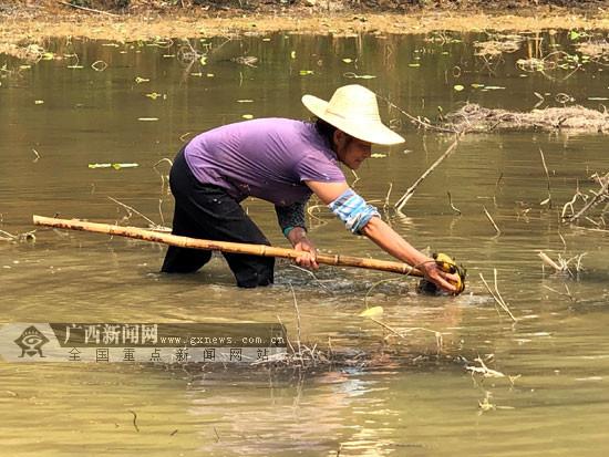 梧州长洲区:壮大村级集体经济 群众共享发展红利