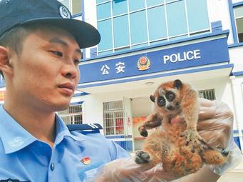 崇左:警民联手 两只国家保护动物蜂猴获救