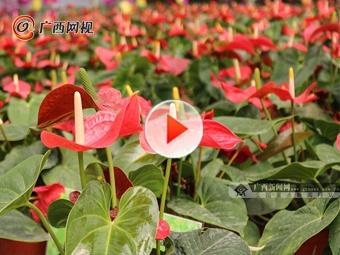 南宁珍藏赏花地 有各类珍稀品种的鲜花