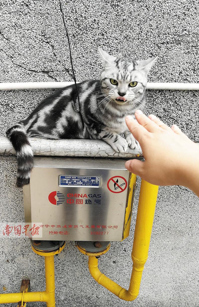 4月29日焦点图:上班时被小动物咬伤算工伤吗?算!
