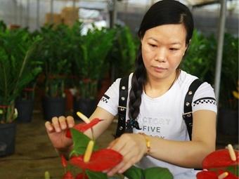 【12小时】花工李安丽:日行200公里维护300盆绿植