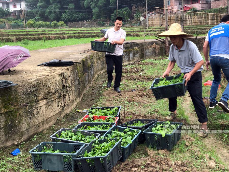 梧州市长洲区发展百香果种植推进产业扶贫(图)