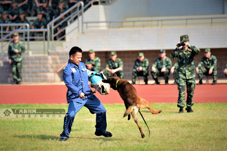 """场上场下""""反差萌"""" 勇猛的警犬也有可爱的一面(图)"""