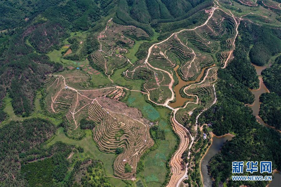 广西钦州:药材种植地成旅游一景