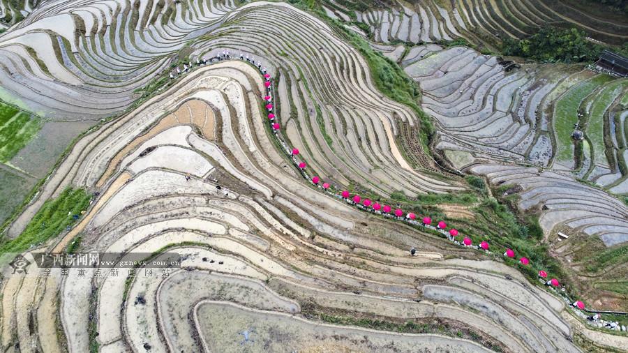 广西龙胜:壮寨欢度梳秧节(组图)