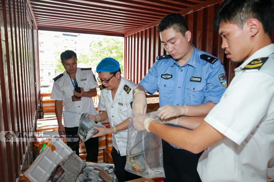 桂粤海关打掉走私海产品团伙 涉案案值约2亿元