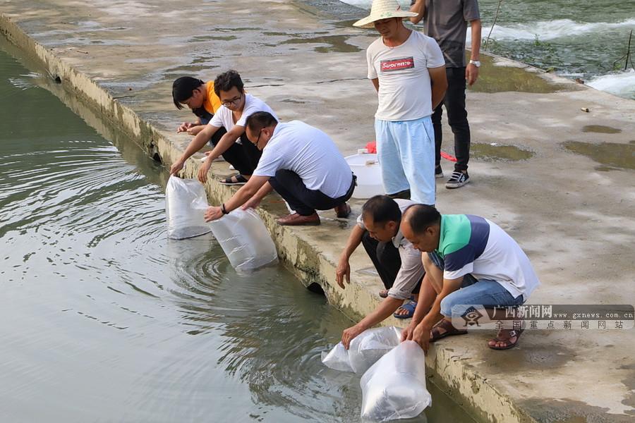 环江开展增殖放流活动 共投放各种鱼苗30万尾