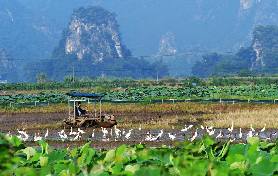 桂林平樂高埠村:發展生態旅游產業助力脫貧增收