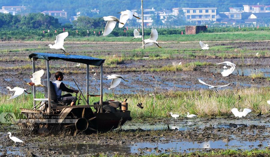 桂林平乐高埠村:发展生态旅游产业助力脱贫增收