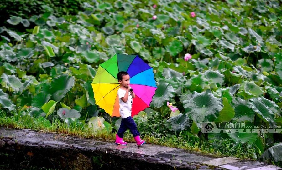 广西龙胜:雨后荷韵惹人醉