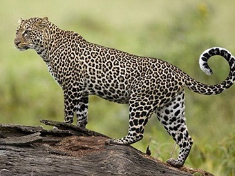 环江世界自然遗产地已被发现有100多种珍稀动植物