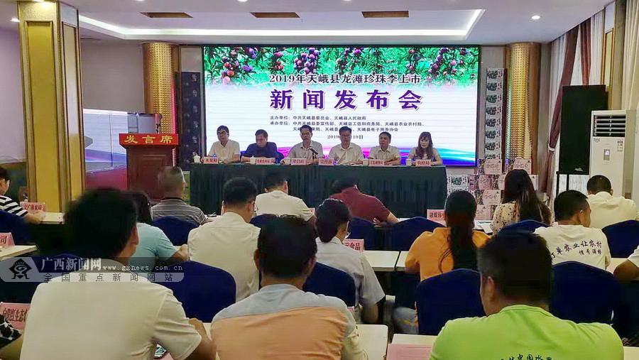 2019年天峨县龙滩珍珠李7月19日开始正式上市啦!