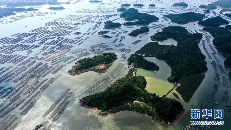"""广西钦州建海洋牧场 打造生态""""蓝色粮仓"""""""