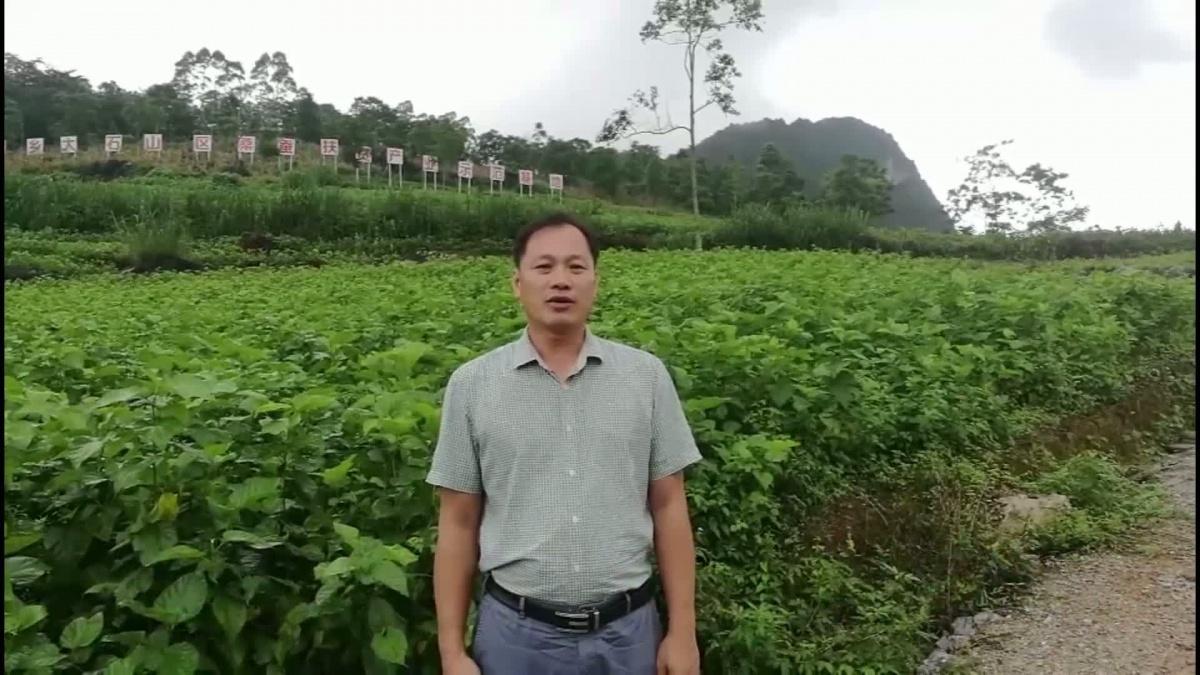 我为家乡代言:靖西南坡乡党委书记黄正刚