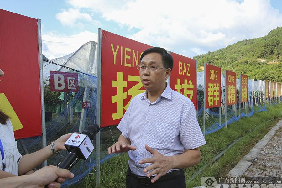 """高清:红色引领绿色崛起 东兰""""走活""""产业致富路"""