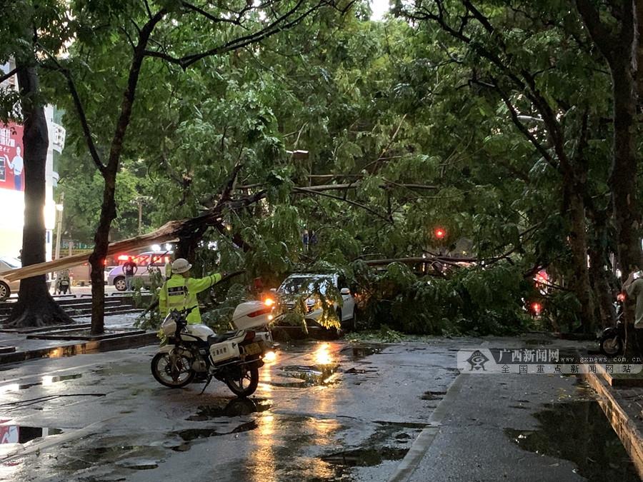 突发! 受强降雨天气影响 南宁古城路大树被刮倒致压翻两车