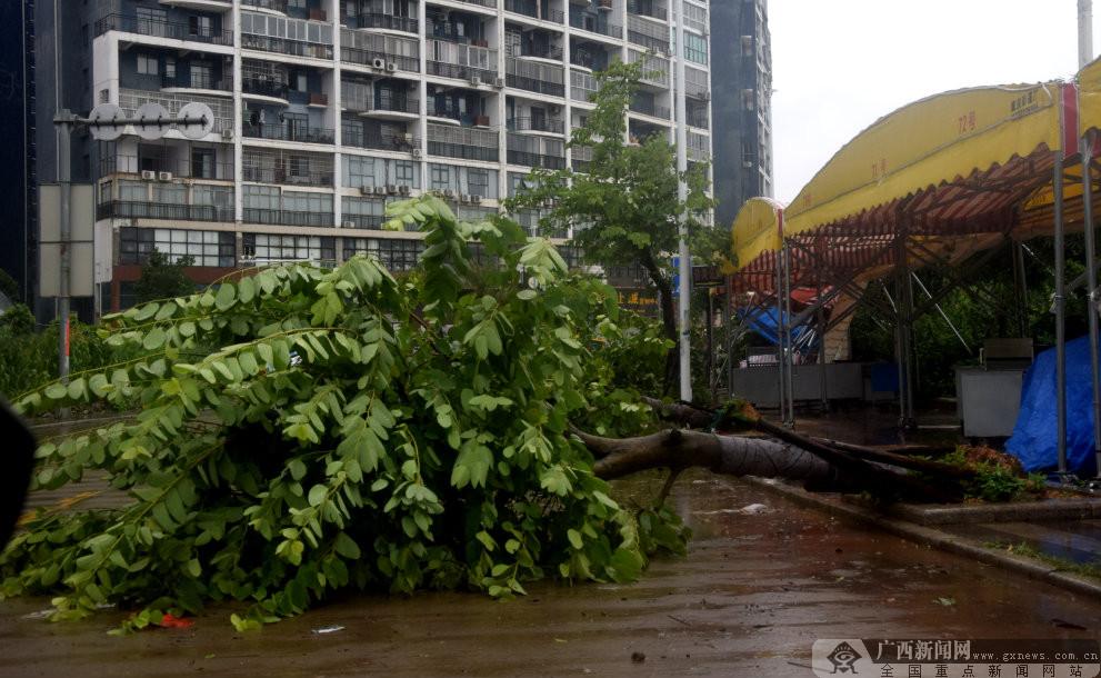 """防城港2850棵景观树因台风""""韦帕""""倒伏"""
