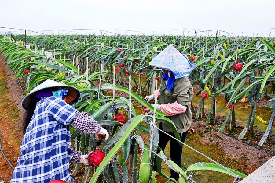 越南广宁省干部赴百色培训 学习中国基层宣传与党建工作理论