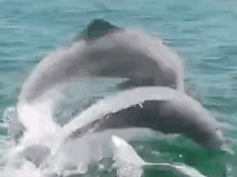 钦州三娘湾海豚跃出水面视频非常壮观?真相是…