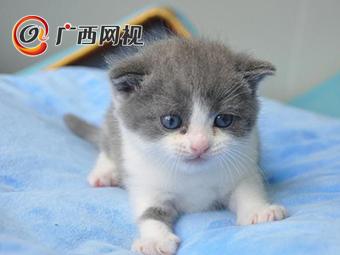 """中国首只克隆猫""""大蒜""""满月啦"""