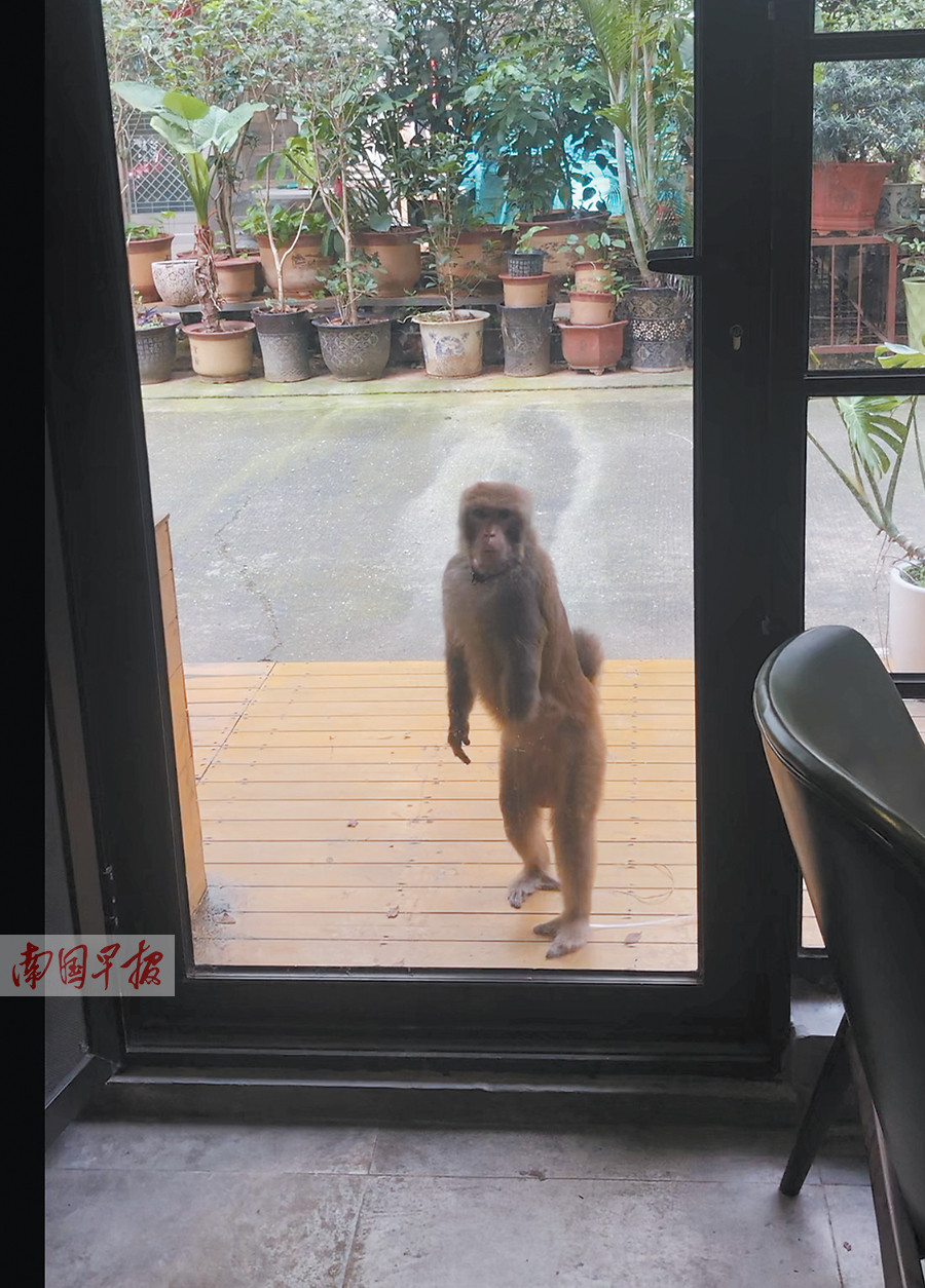 """9月1日焦点图:南宁一小区出现流浪""""猴哥"""""""