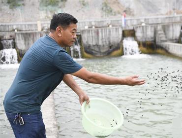 """蒋开均:冷水鱼养出重庆山区""""热经济"""""""